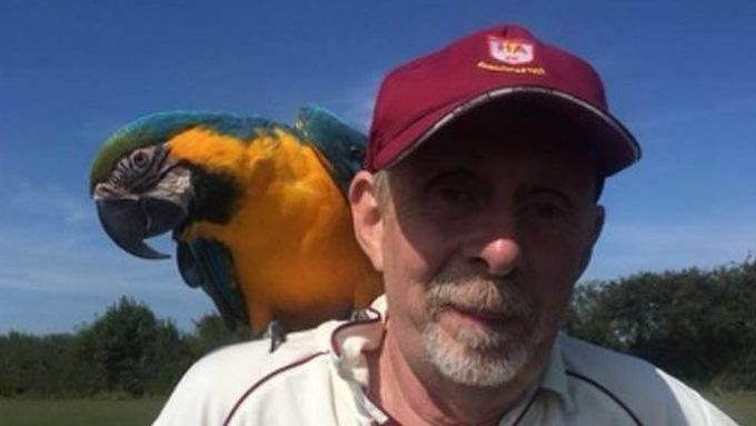 Parrot stops play in club match